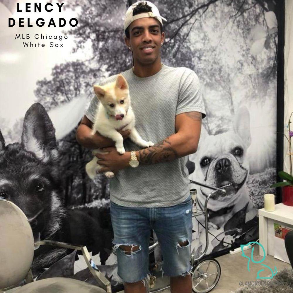 Glamorous Puppies: 8150 SW 8th St, Miami, FL