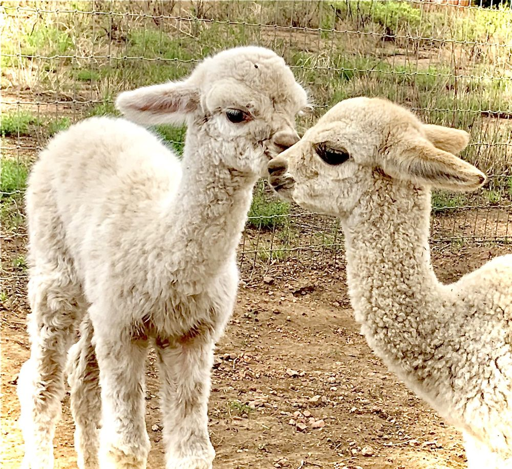 Casa Alpaca: 18 Rancho Cholla Ln, Santa Fe, NM