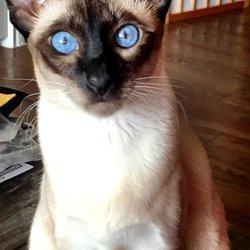 Nourish Pet Care - (New) 19 Photos & 52 Reviews - Pet Stores
