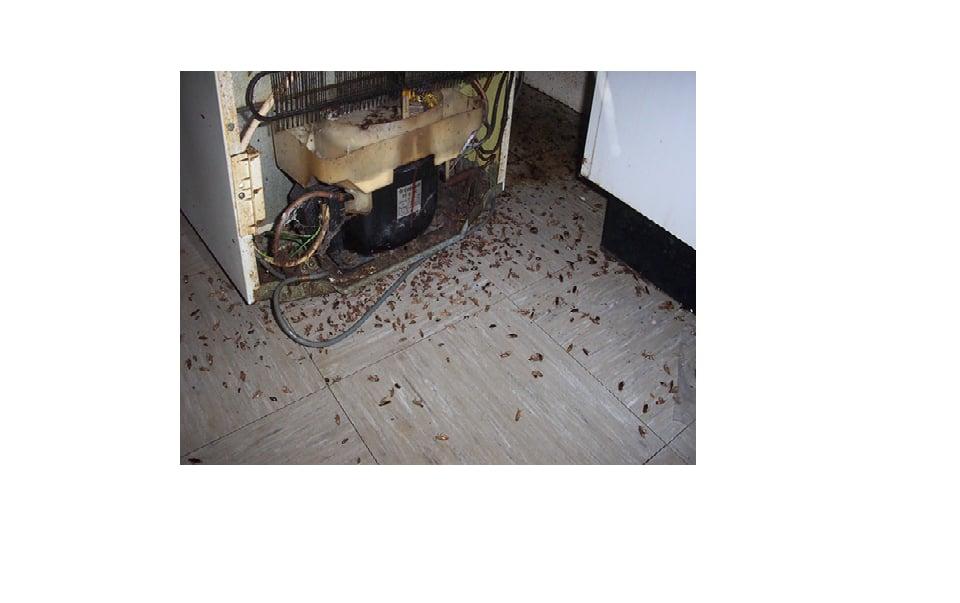 Roach Treatment Yelp
