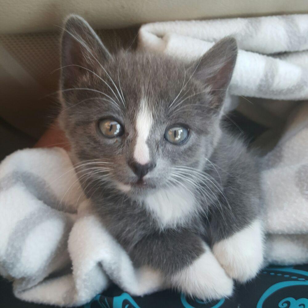 Skyline Pet Care: Charlottesville, VA