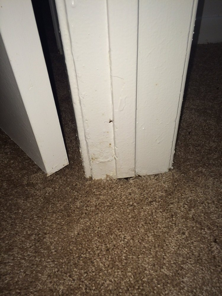 Photo Of Bridgestone Apartments   Friendswood, TX, United States. Lots Of  Roaches/