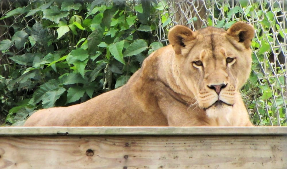 Tri-State Zoological Park: 10105 Cottage Inn Ln NE, Cumberland, MD