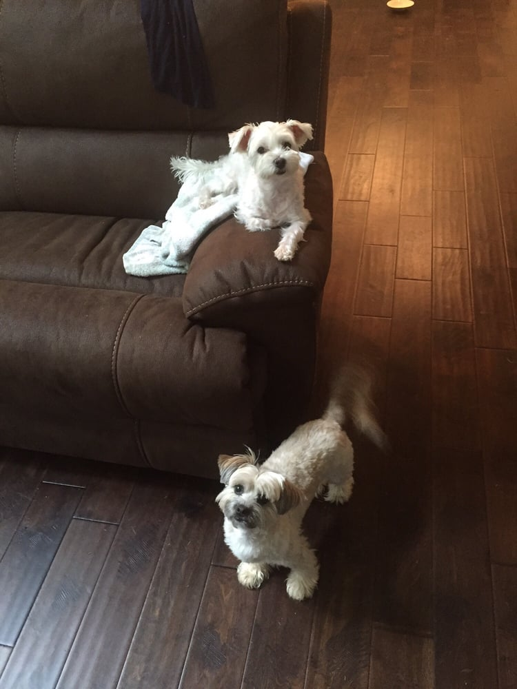 Puppy Friends Social Club: Buford, GA