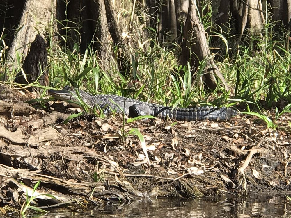 Canoe Escape: 12702 N US Hwy 301, Thonotosassa, FL