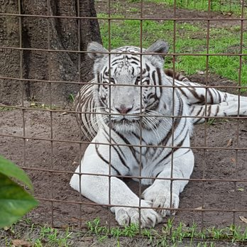 Big Cat Rescue - 277 Photos & 225 Reviews - Zoos - 12802 Easy St