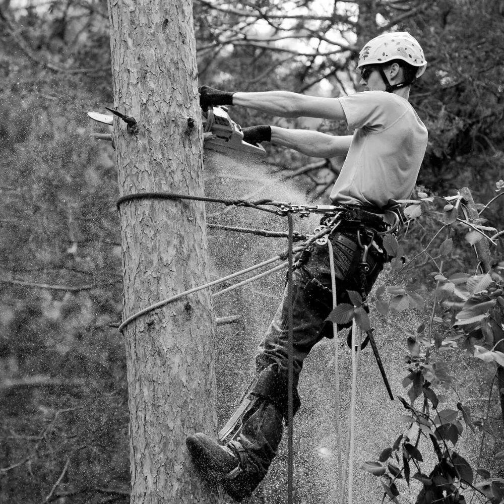 Ben The Tree Guy: Brainerd, MN