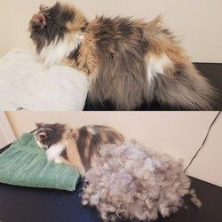 Kayla's Posh Pets Grooming & Boutique - 34 Photos & 18 Reviews - Pet