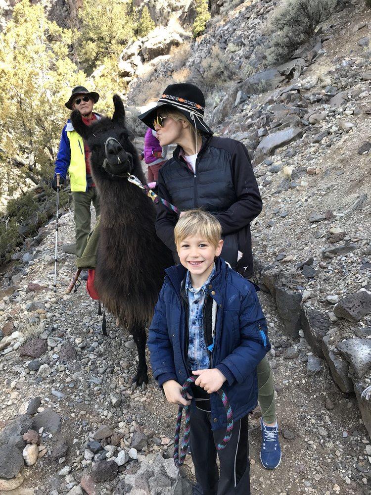 Wild Earth Llama Adventures: Taos, NM