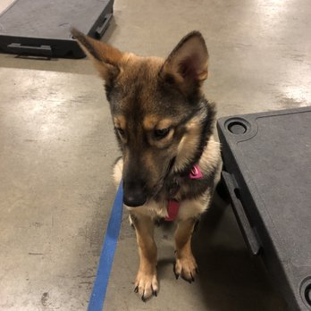 PetSmart - 470 Shaw Ave, Clovis, CA - 2019 All You Need to