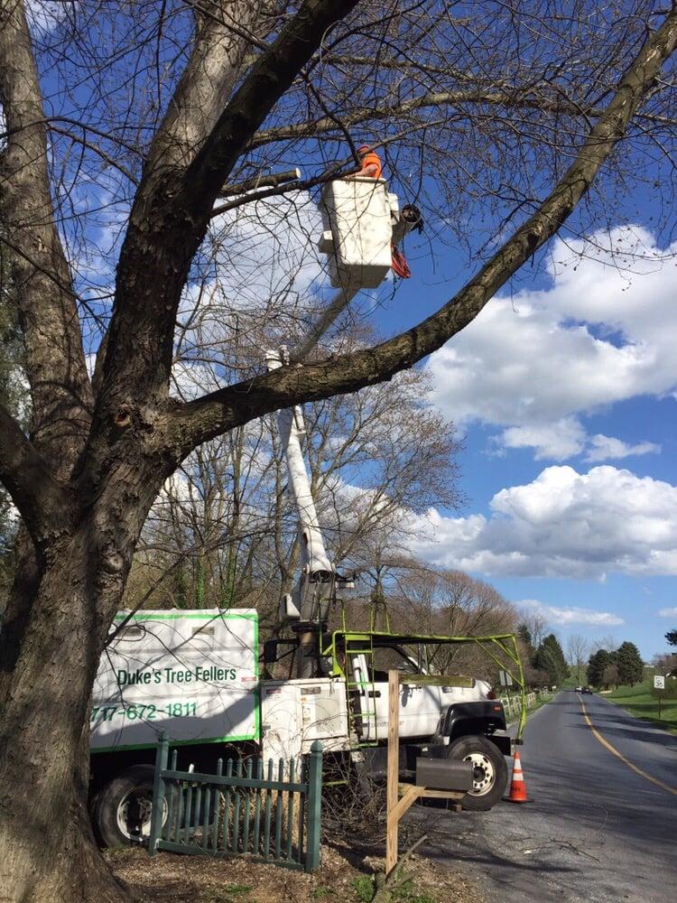Duke's Tree Fellers: Lancaster, PA