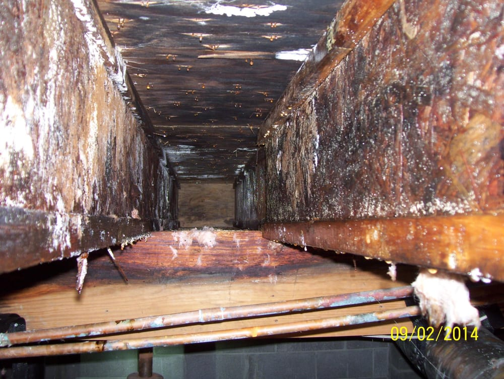 significant mold growth on water damaged engineered floor joists