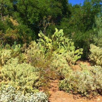Photo Of Desert Botanical Garden   Phoenix, AZ, United States. Desert  Botanical Garden