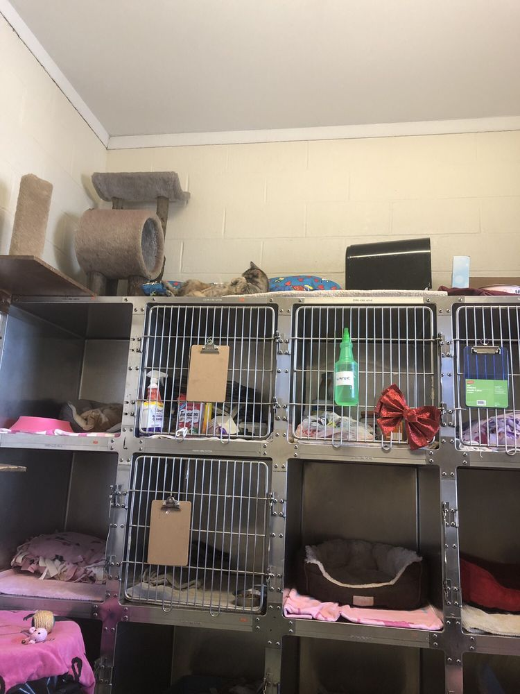 Mt Vernon Animal Shelter: 600 Garden Ave, Mount Vernon, NY