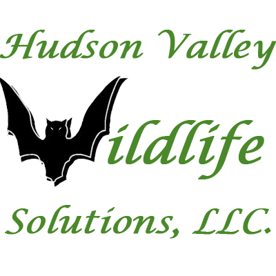 Hudson Valley Wildlife Solutions: 206 3rd St, Troy, NY