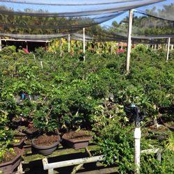 Photo Of Oriental Nursery Farm Miami Fl United States