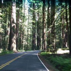 Photo Of Stonegate Villas Leggett Ca United States Huge Redwoods Nearby