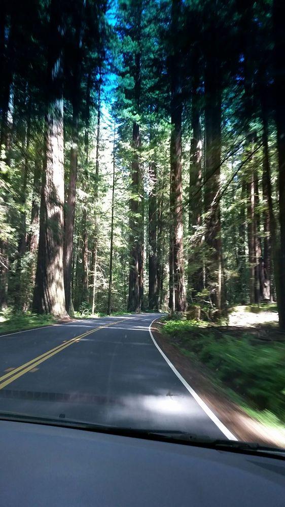 Stonegate Villas: 65260 Drive Thru Tree Rd, Leggett, CA
