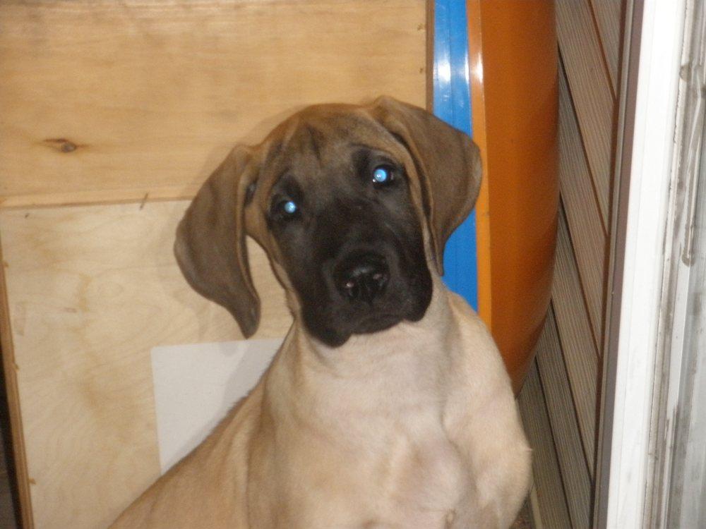 Rensselaer Pet Care: 1103 N Cullen St, Rensselaer, IN