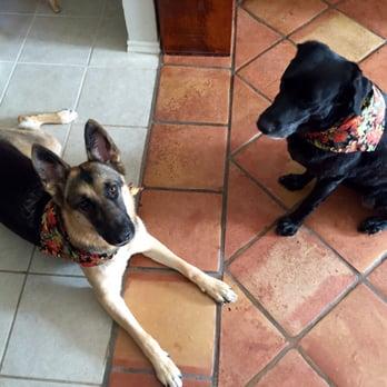 Pet S Envy Mobile Pet Spa 10 Photos Pet Groomers Allen Tx