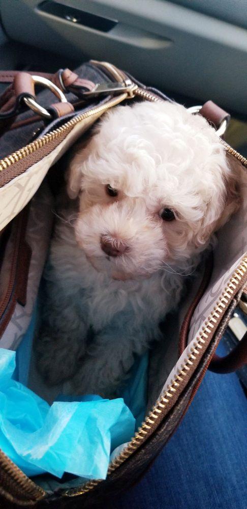 David's Dog Grooming: 224 Cay Ct, Newbury Park, CA