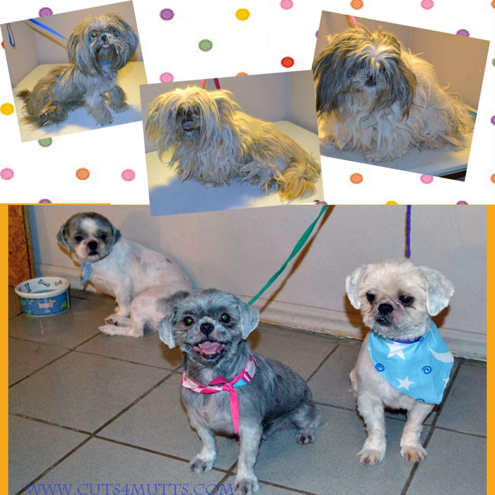 Do It Yourself Dog Grooming Places