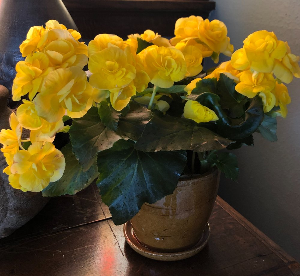 Pierson's Flower Shop & Greenhouses: 1800 Ellis Blvd NW, Cedar Rapids, IA