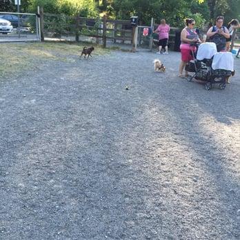 Wapato Park Off Leash Dog Park