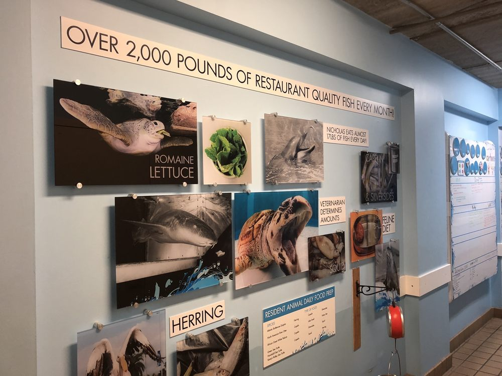 Clearwater Marine Aquarium: 249 Windward Passage, Clearwater, FL