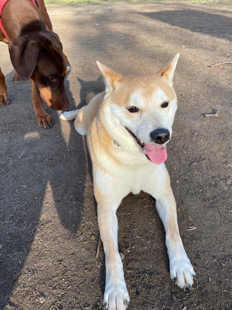 Dog Park At Rohr Park: 3605 Bonita Verde Dr, Bonita, CA