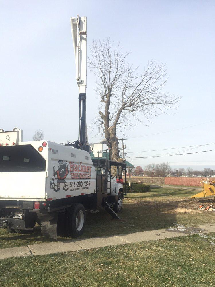 Hackney Tree Service: College Corner, OH