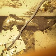 debris photo of all clean dryer vent cleaning arvada co united states - Duct Cleaning Jobs