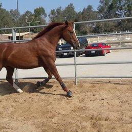 Horse Play Rentals Huntington Beach Ca