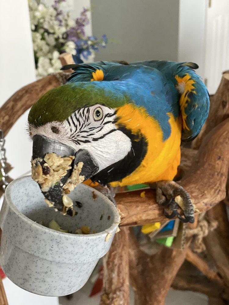 The Bird Shop & Exotic Critter Corner: 1555 State Road 436, Winter Park, FL