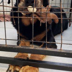 SAFE Pet Rescue - Pet Adoption - St  Augustine, FL - Phone