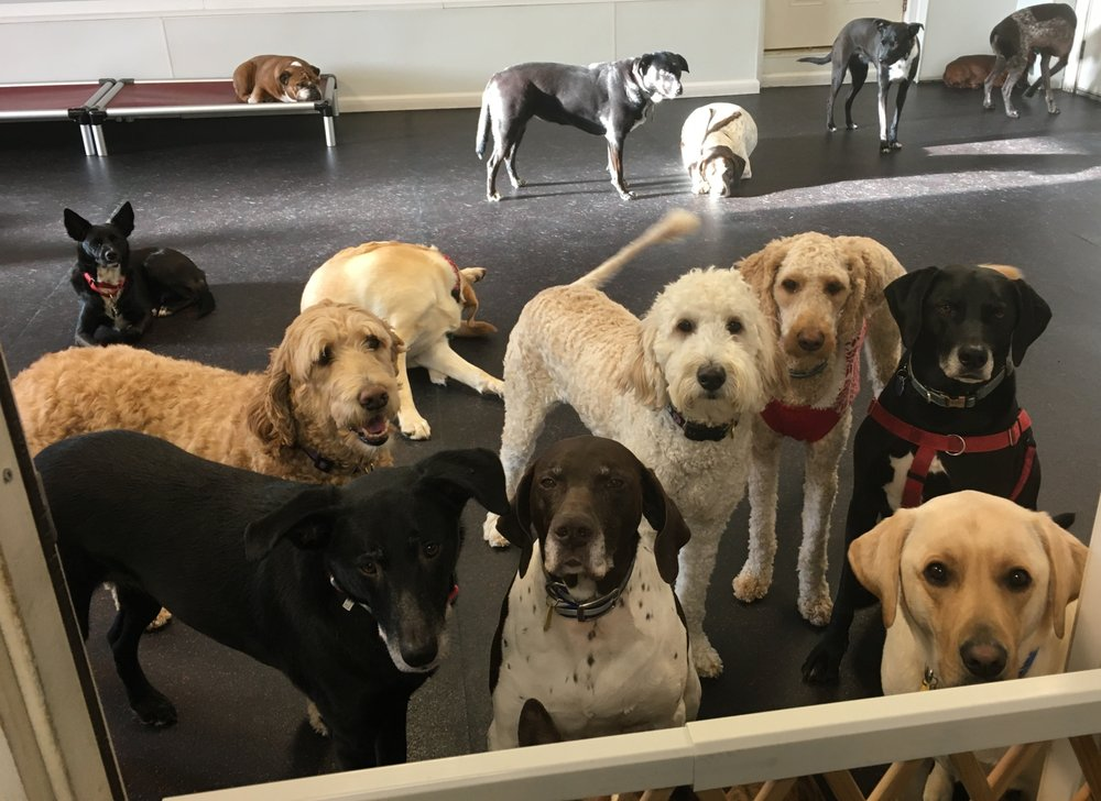 Lucys Dog Daycare: 296 Shawsheen Ave, Wilmington, MA