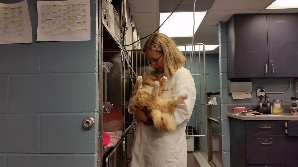 Society Hill Veterinary Hospital