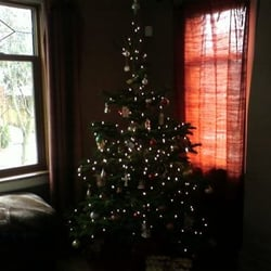 photo of chubby tubby christmas trees seattle wa united states my