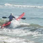 Bald Eagle Photo Of Kayak Nature Tours Virginia Beach Va United States Kayaking With
