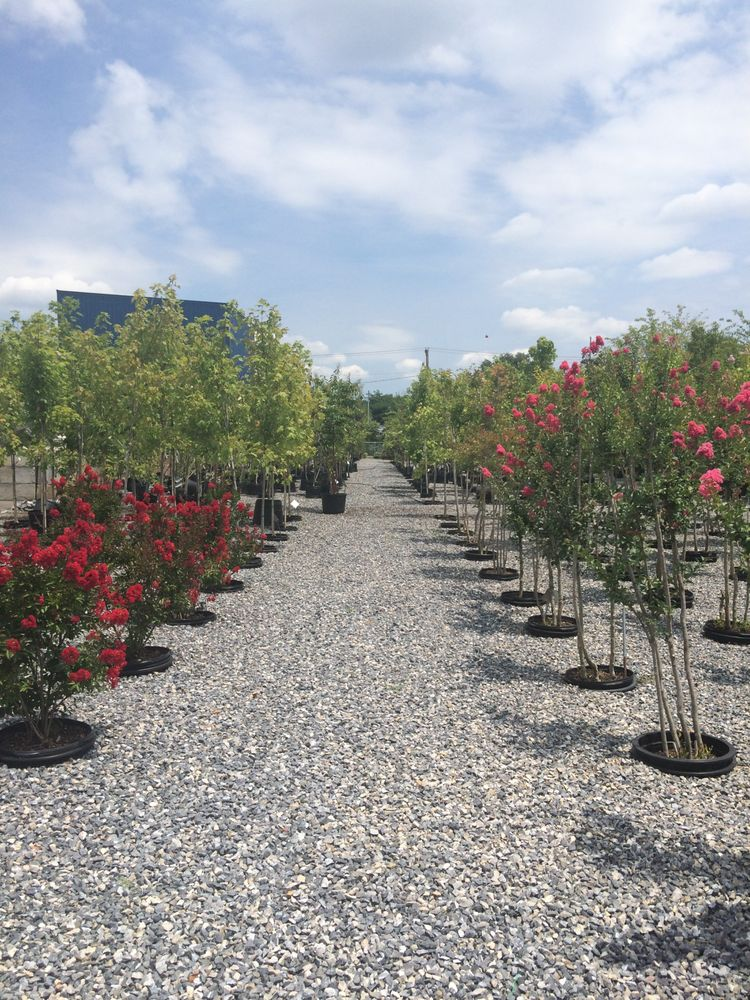 Pine Ridge Nursery & Landscaping: 41 Hurt Ln, Salem, VA
