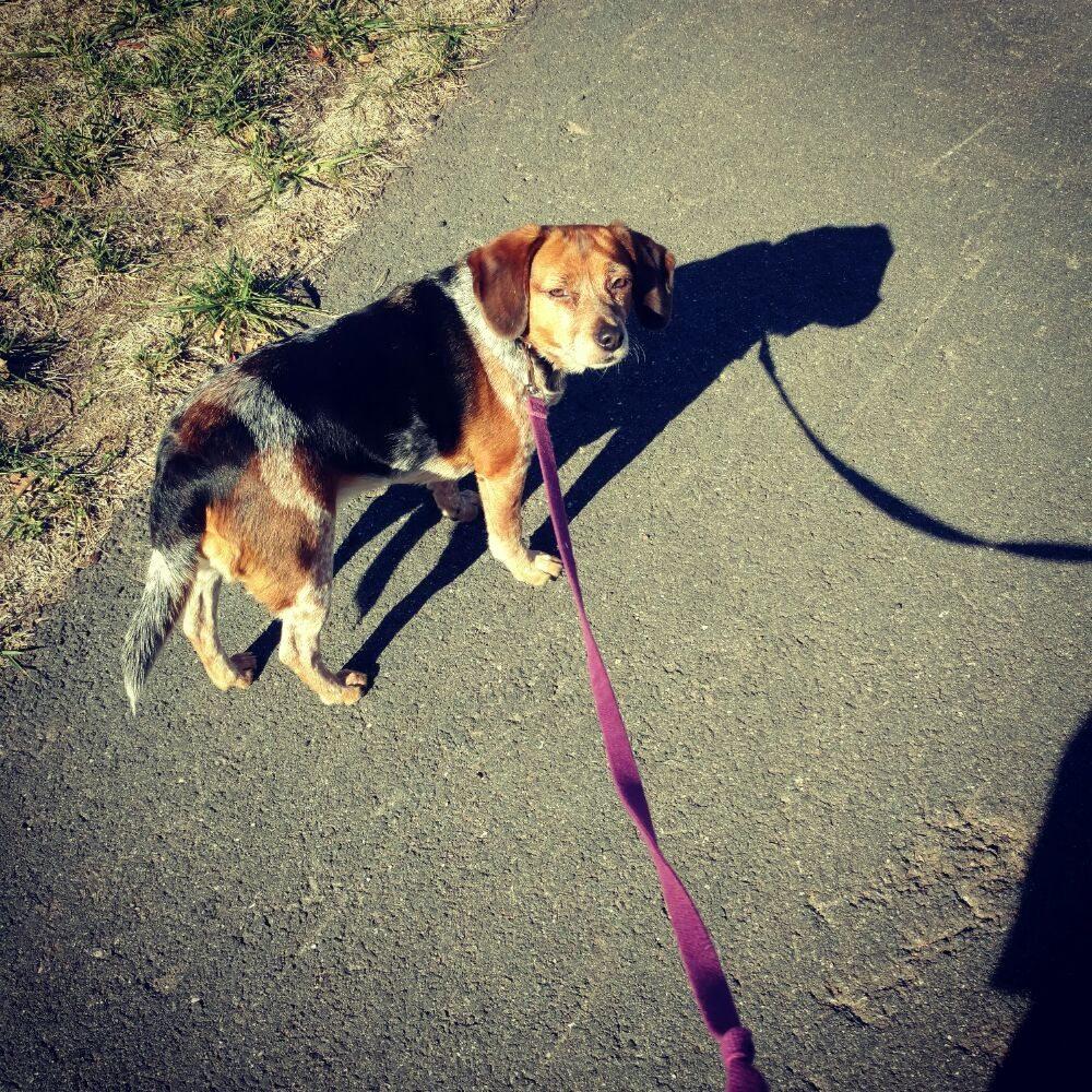 Auntie M's Professional Pet Care: 131 Avondale Dr, Sterling, VA