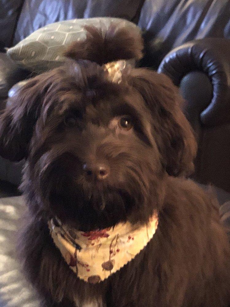 Susan's Barking Beauties Professional Grooming: 5649 Rivers Ave, North Charleston, SC