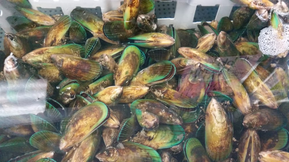 Live mussel yelp for Long beach fish market