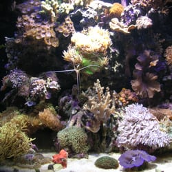 Photo Of Living Art Aquatics   Cary, IL, United States. Exotic And Common
