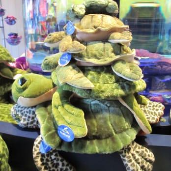 Turtle Reef at Sea World - 45 Photos - Aquariums - 500 Sea World ...