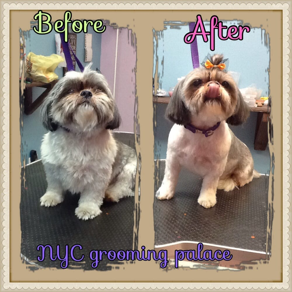 Dog Grooming Training Nyc Interior Design Photos Gallery