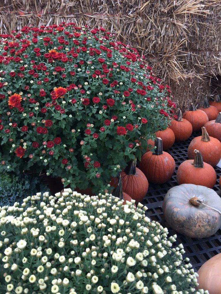 Sharon Nursery-Garden Store: 7319 Columbia Rd, Maineville, OH