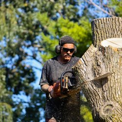 Image result for Tree Care Expert