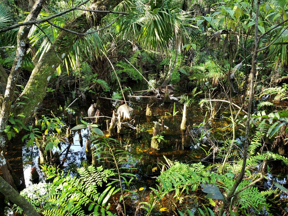 Fern Forest Nature Center: 201 S Lyons Rd, Coconut Creek, FL