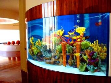 California custom aquariums 31 photos aquarium for Fish tank cleaning service near me